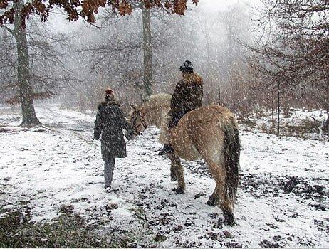 снежная и ветреная погода