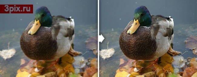 Уроки Photoshop: Улучшение качества фотографии